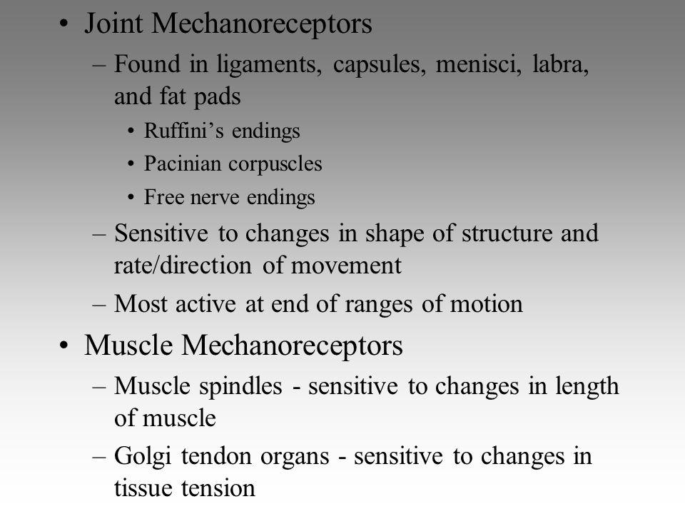 Joint Mechanoreceptors