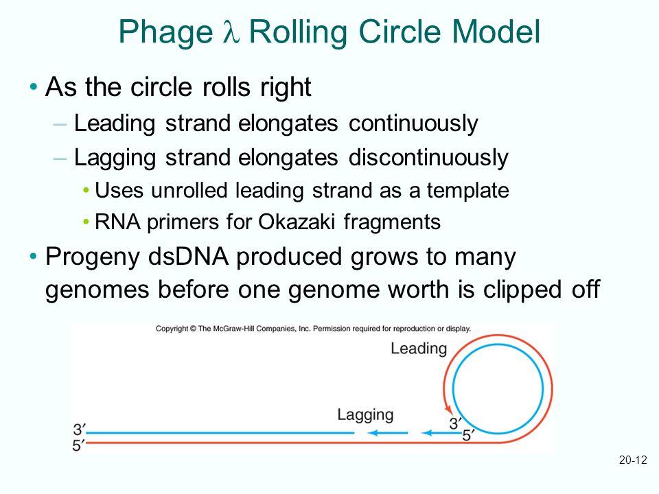 Phage l Rolling Circle Model