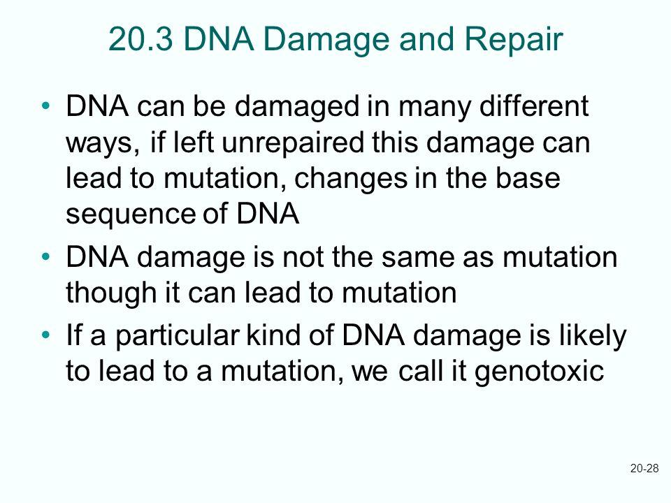20.3 DNA Damage and Repair