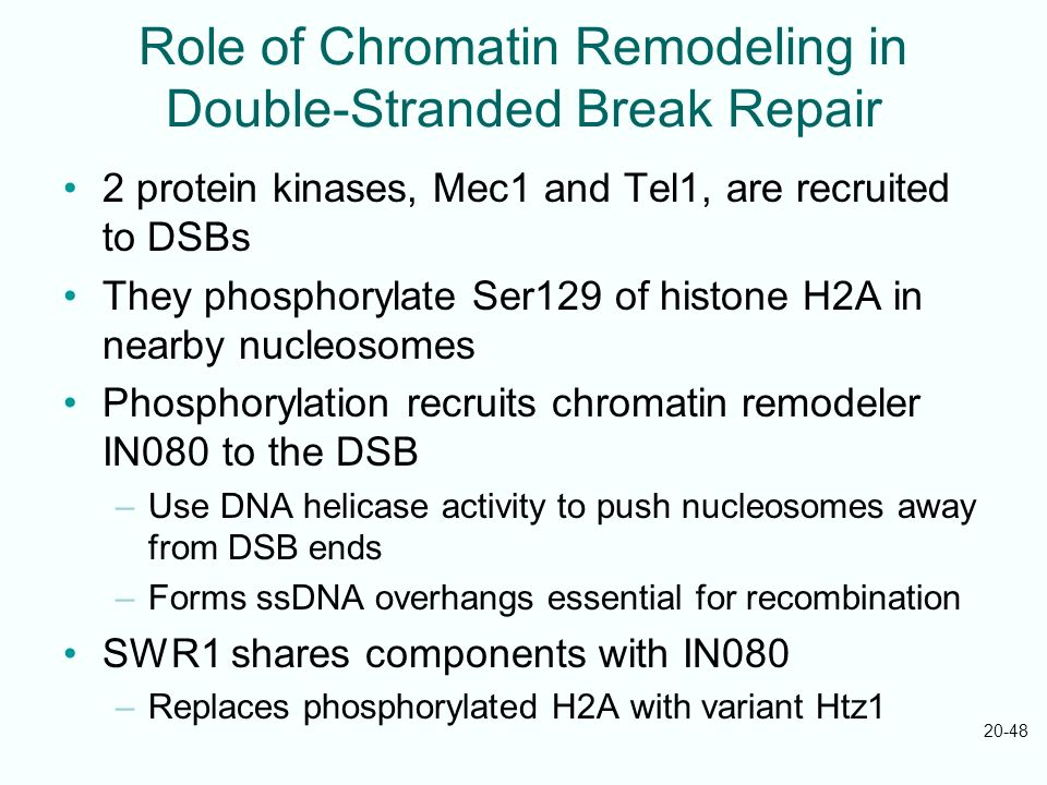 Role of Chromatin Remodeling in Double-Stranded Break Repair