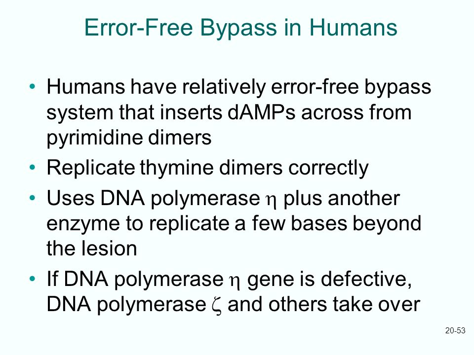 Error-Free Bypass in Humans