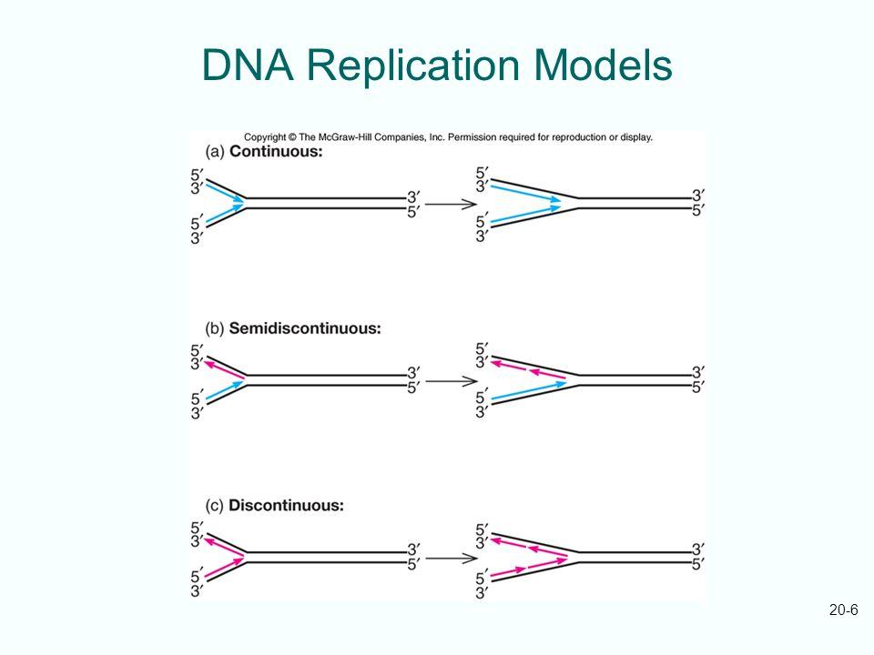DNA Replication Models