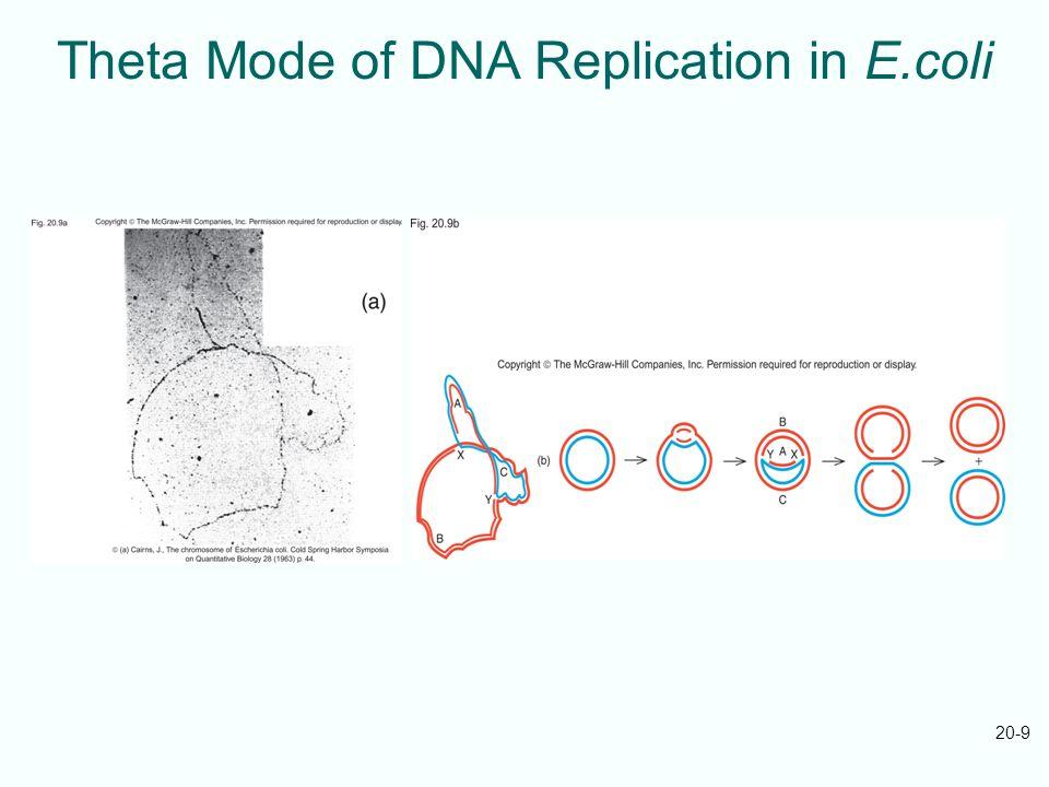 Theta Mode of DNA Replication in E.coli