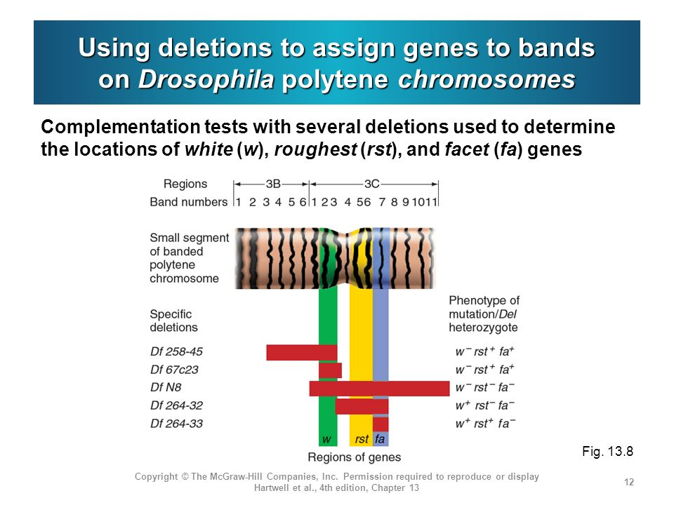 Using deletions to assign genes to bands on Drosophila polytene chromosomes