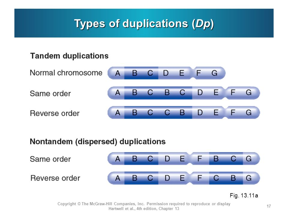Types of duplications (Dp)