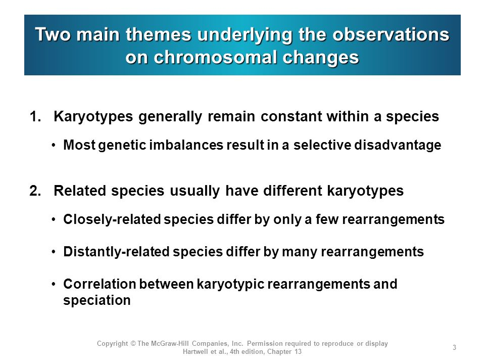 Two main themes underlying the observations on chromosomal changes