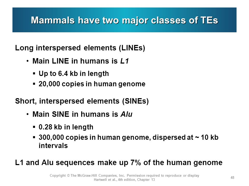 Mammals have two major classes of TEs