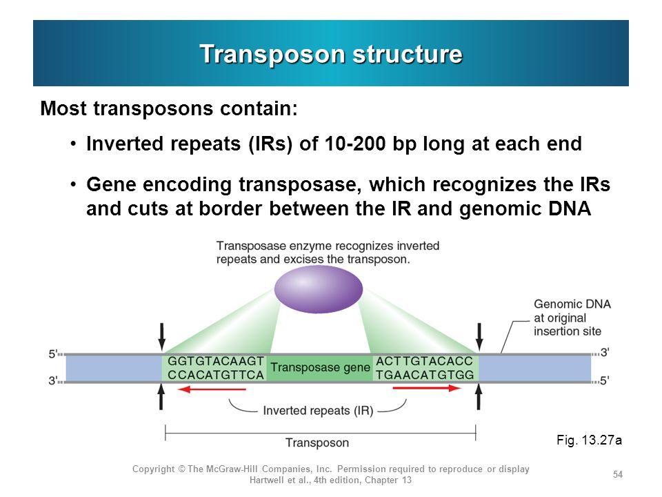 Transposon structure Most transposons contain: