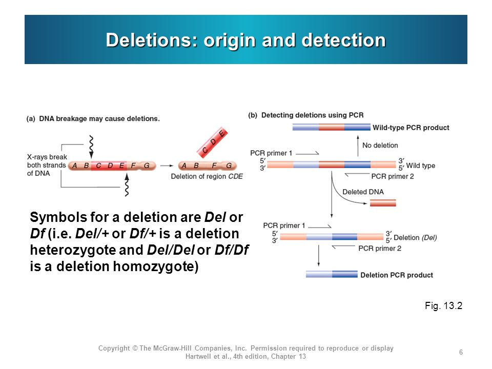 Deletions: origin and detection