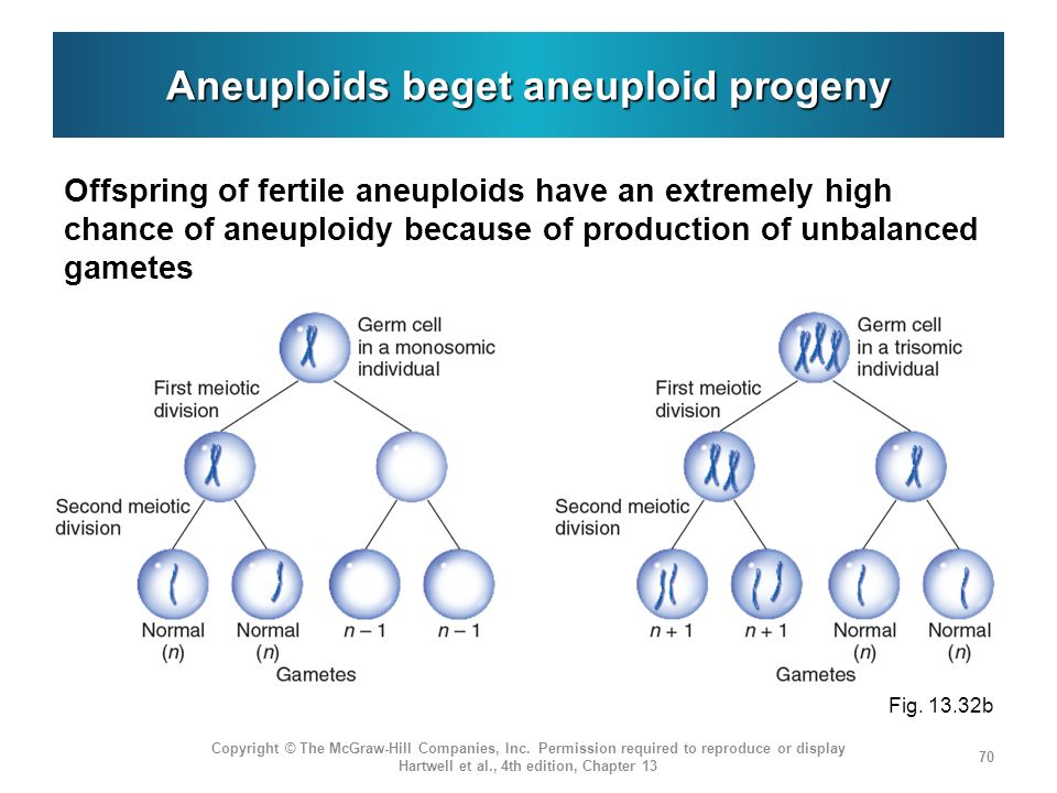 Aneuploids beget aneuploid progeny