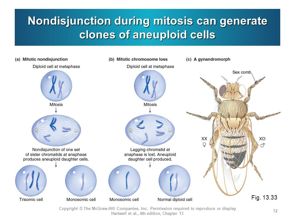 Nondisjunction during mitosis can generate clones of aneuploid cells