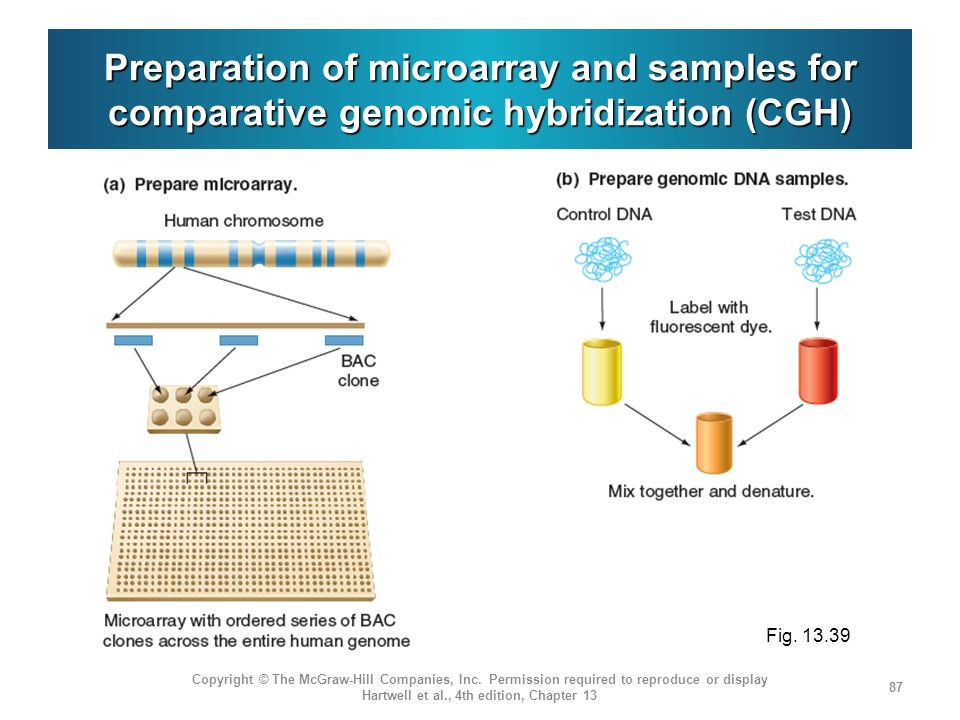Preparation of microarray and samples for comparative genomic hybridization (CGH)