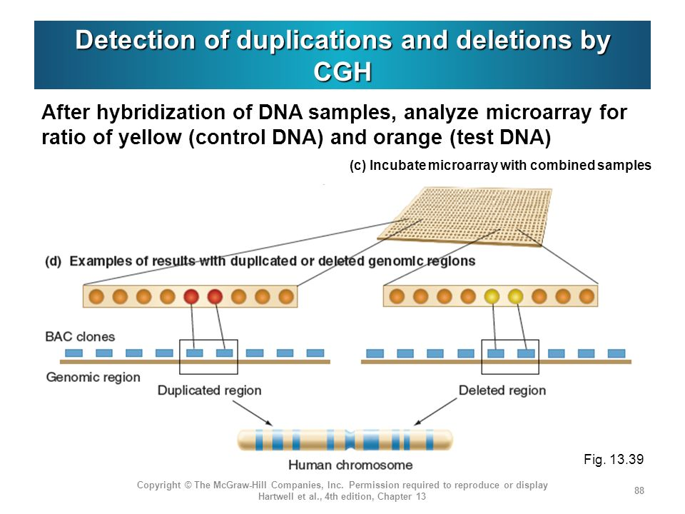 Detection of duplications and deletions by CGH