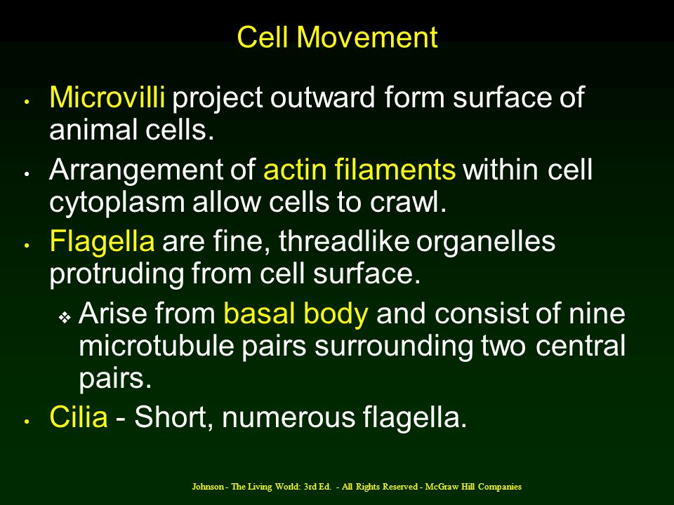 Microvilli project outward form surface of animal cells.
