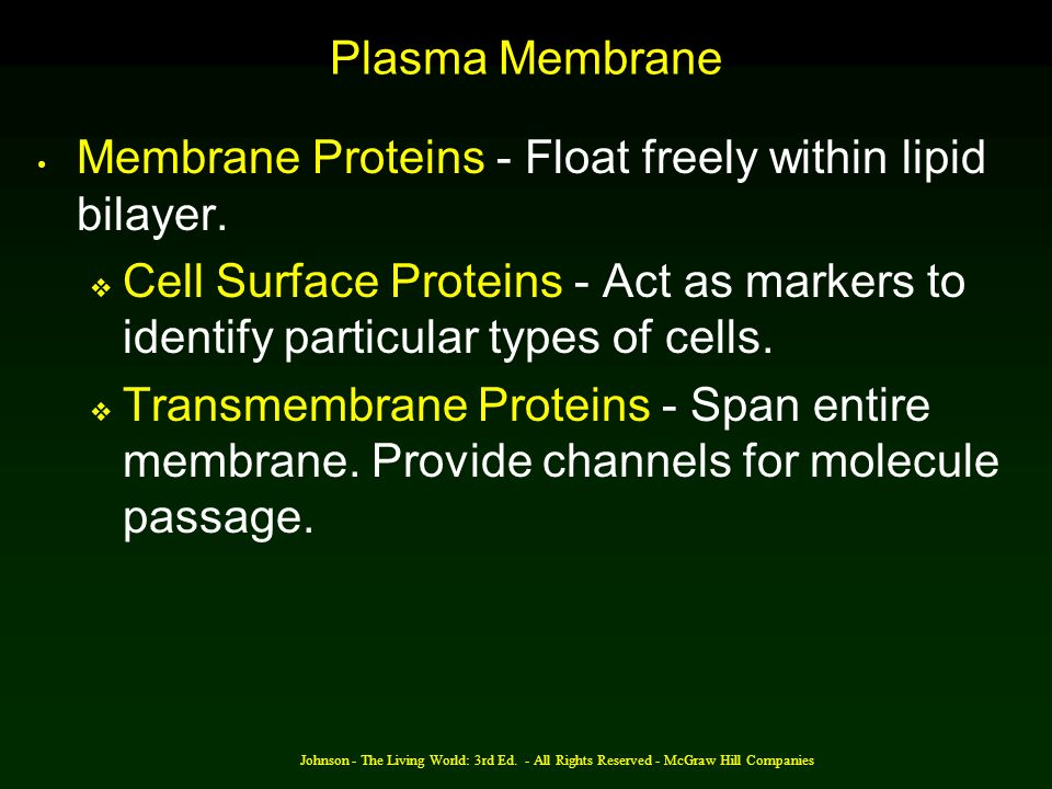 Membrane Proteins - Float freely within lipid bilayer.