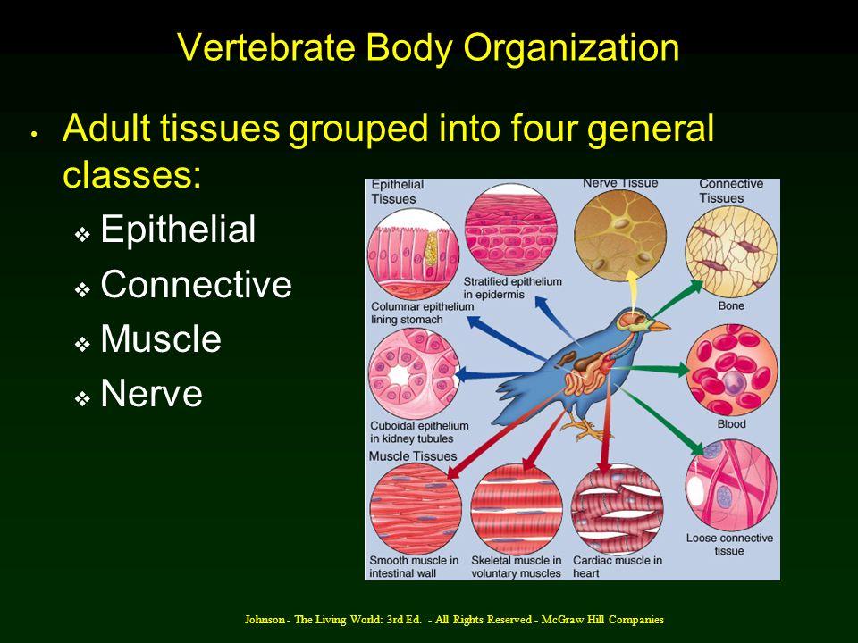 Vertebrate Body Organization