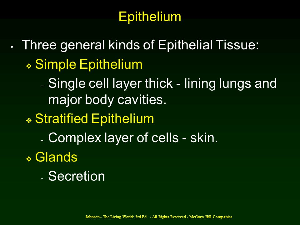 Three general kinds of Epithelial Tissue: Simple Epithelium