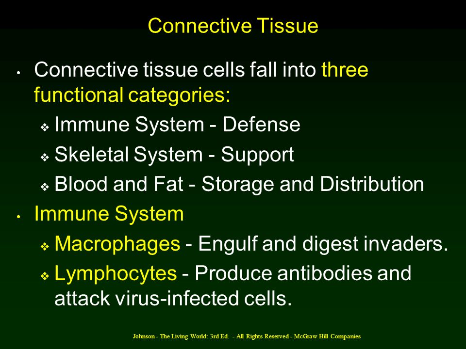 Connective tissue cells fall into three functional categories: