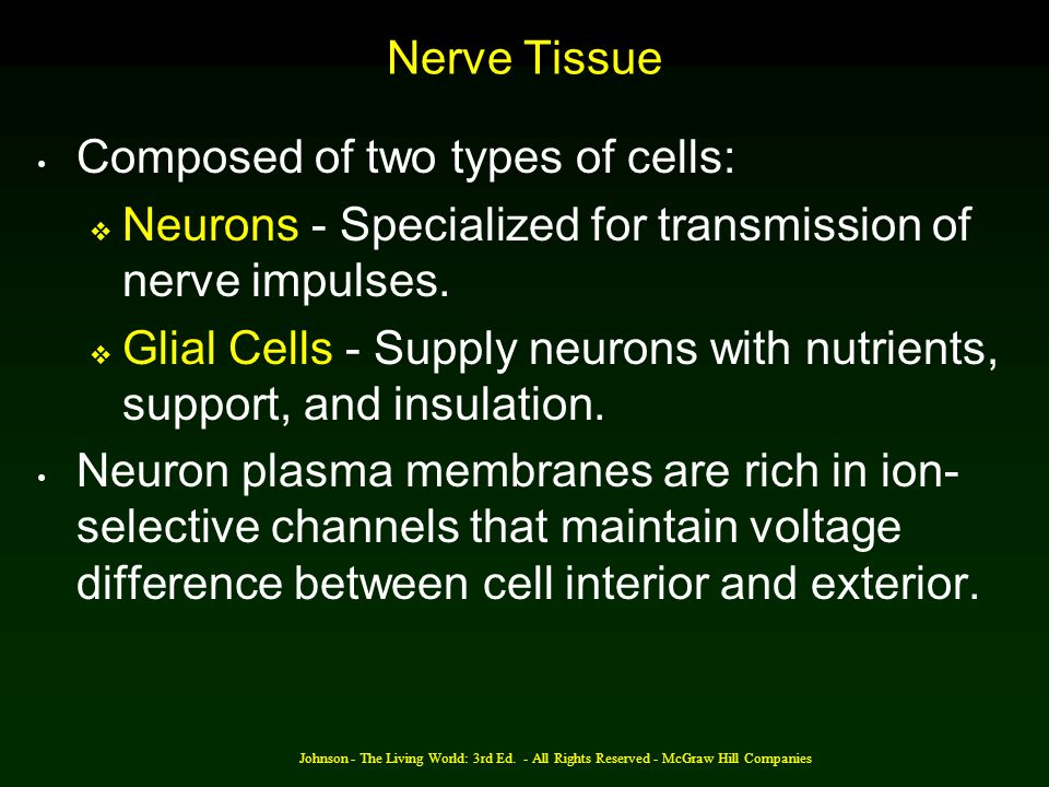 Composed of two types of cells: