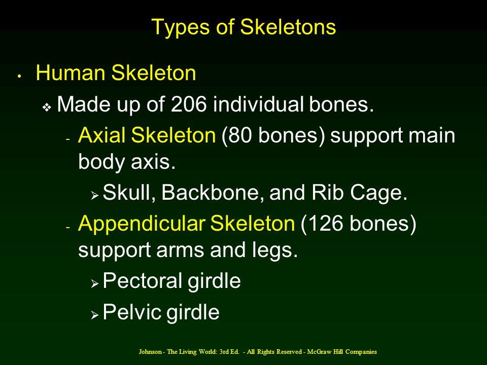 Made up of 206 individual bones.
