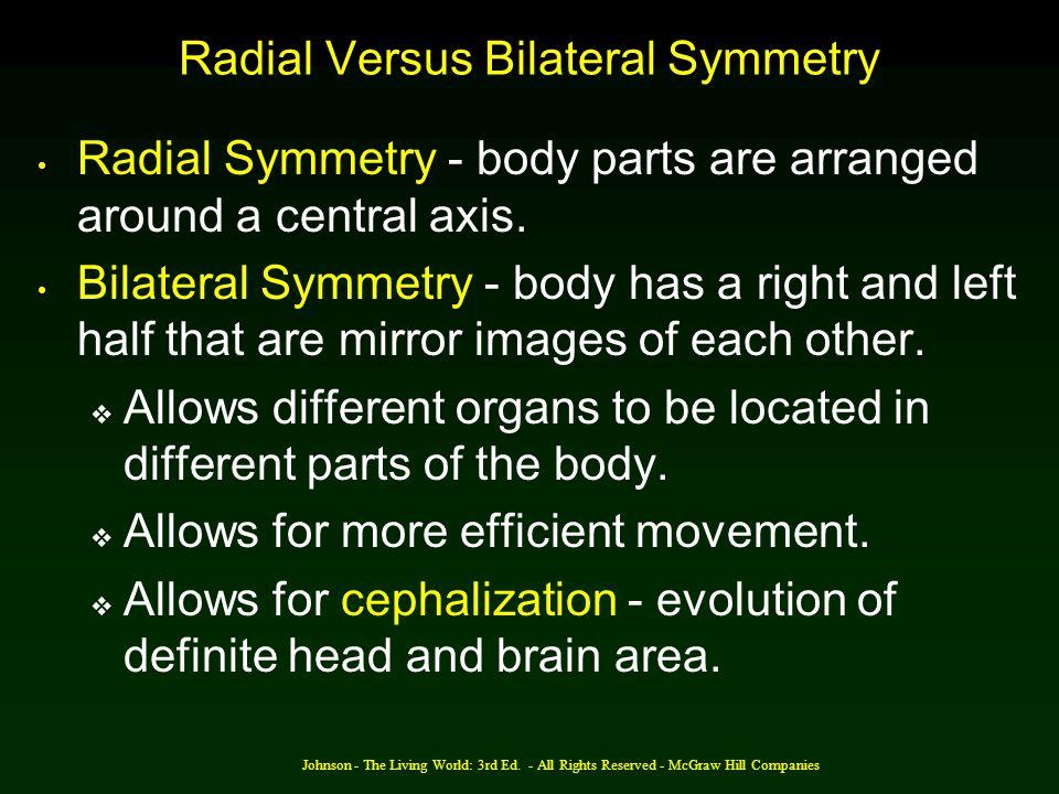 Radial Versus Bilateral Symmetry
