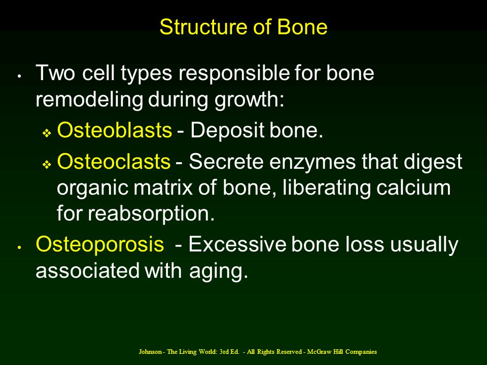 Two cell types responsible for bone remodeling during growth: