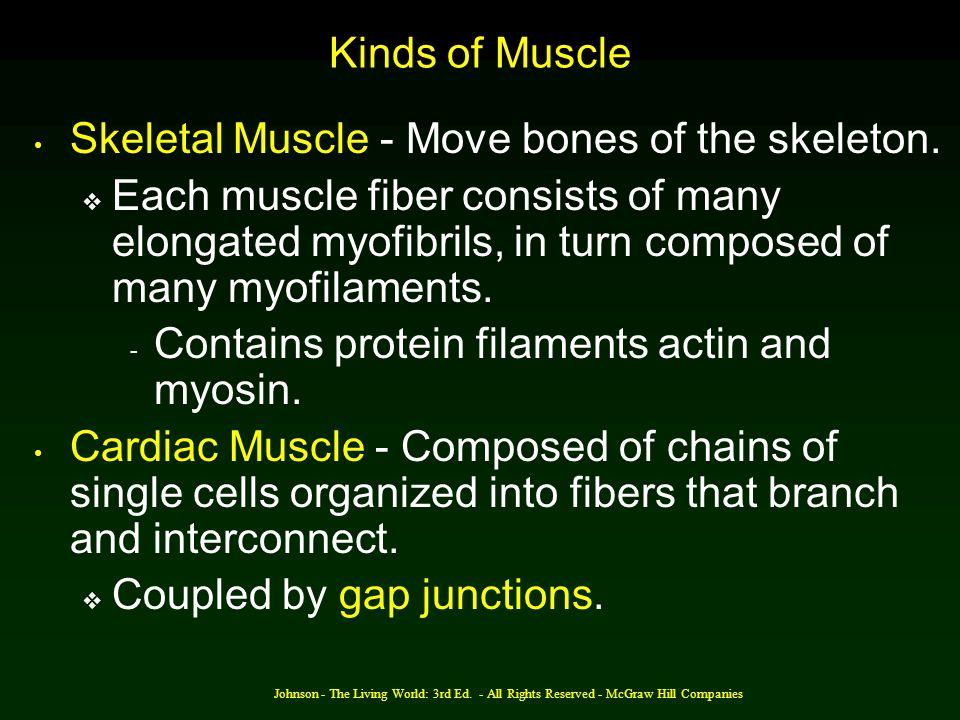 Skeletal Muscle - Move bones of the skeleton.