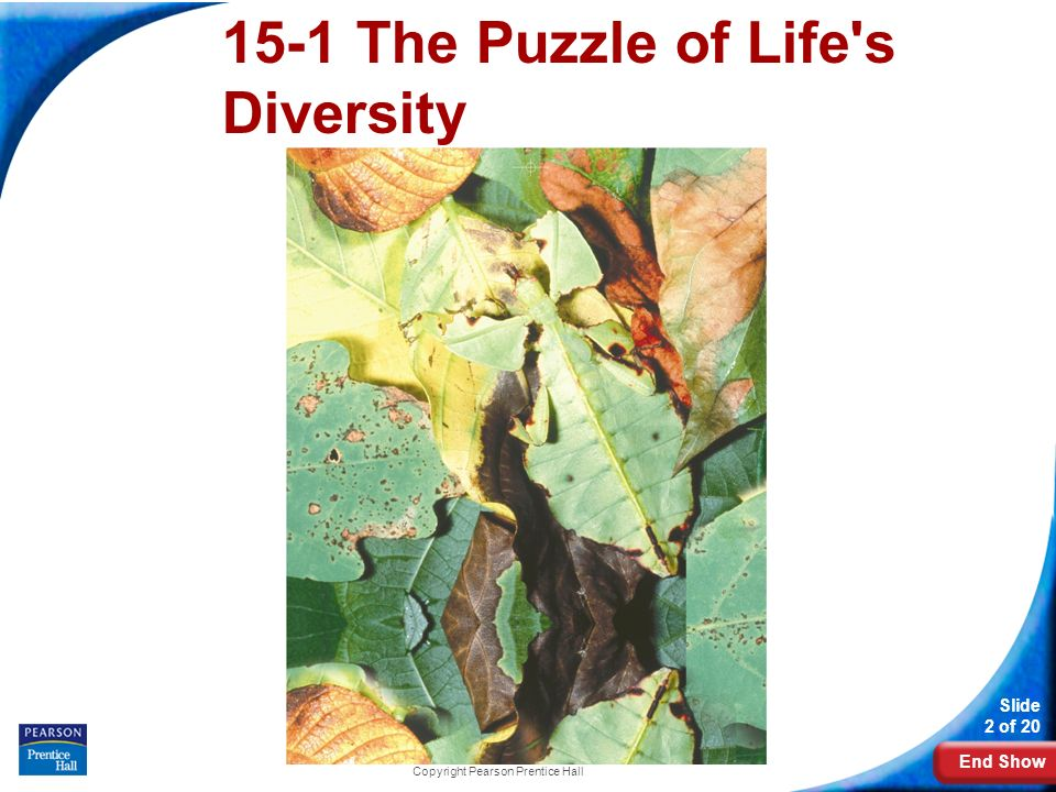 15-1 The Puzzle of Life s Diversity