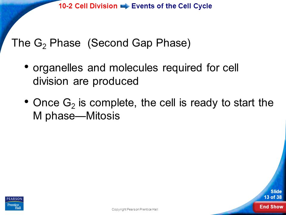 Events of the Cell Cycle
