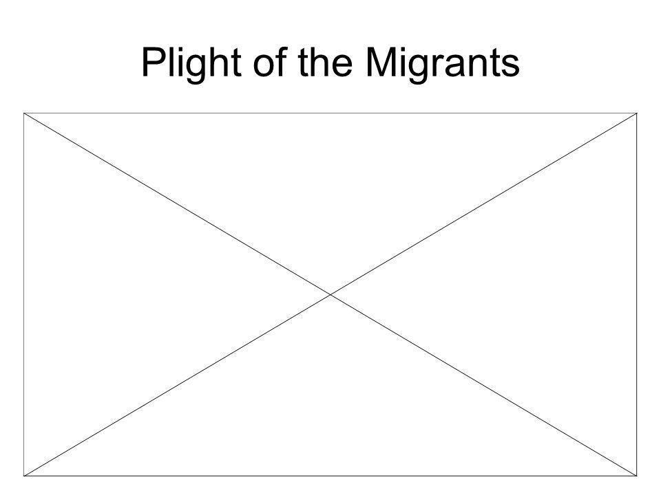 Plight of the Migrants