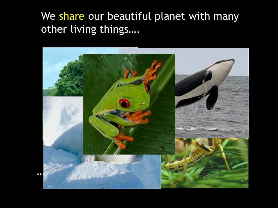 We share our beautiful planet with many other living things….