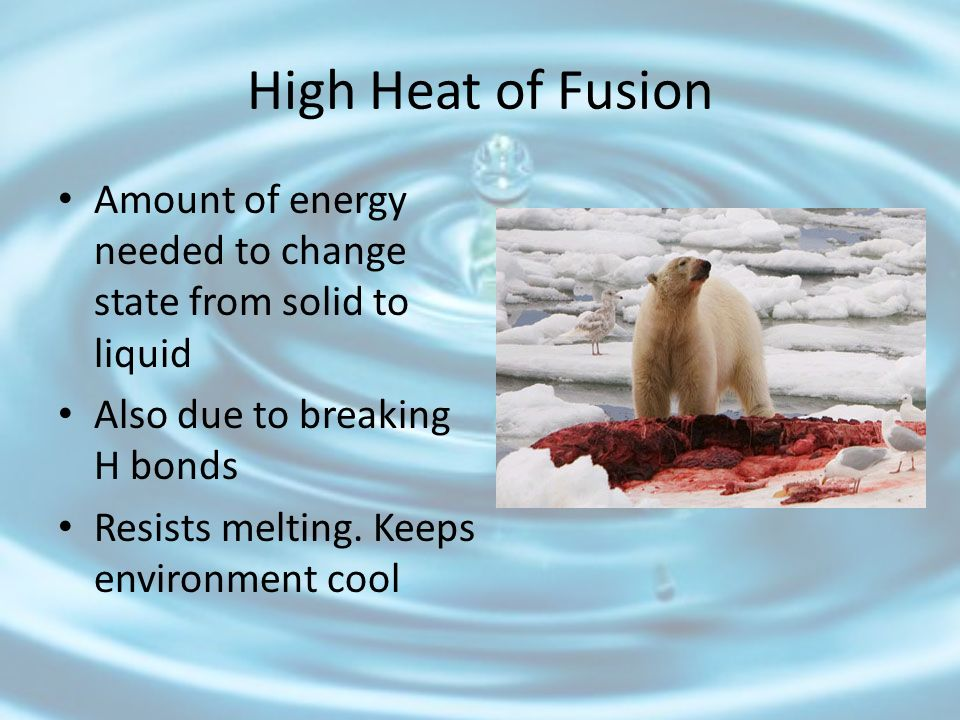High Heat of Fusion Amount of energy needed to change state from solid to liquid. Also due to breaking H bonds.