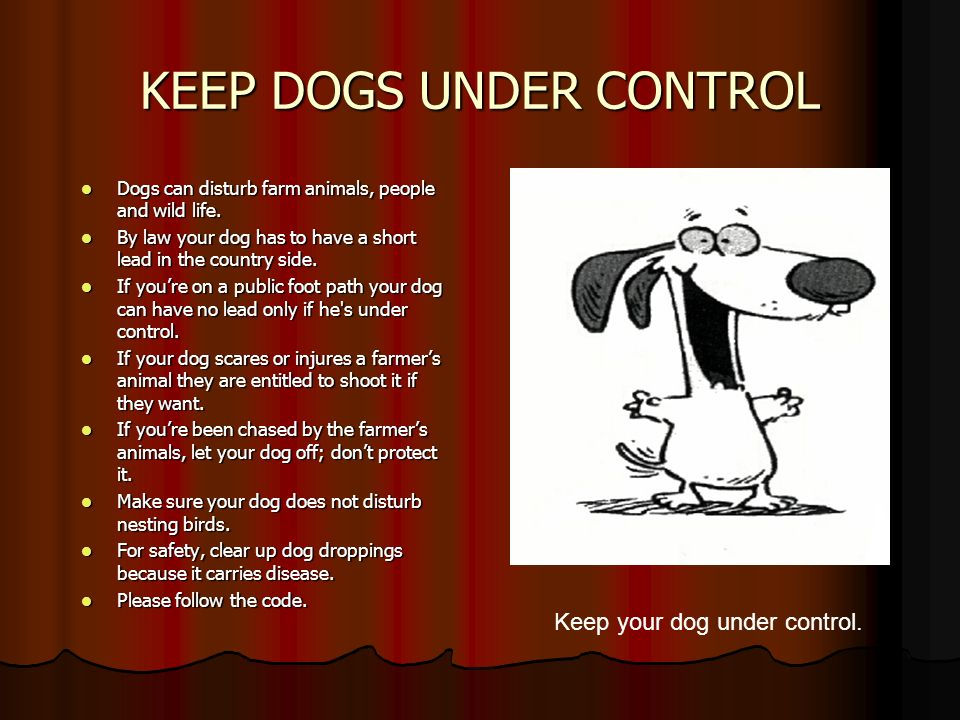 KEEP DOGS UNDER CONTROL