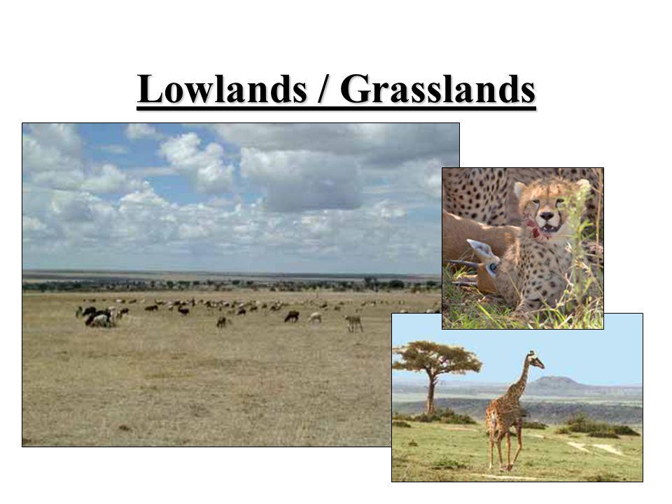 Lowlands / Grasslands