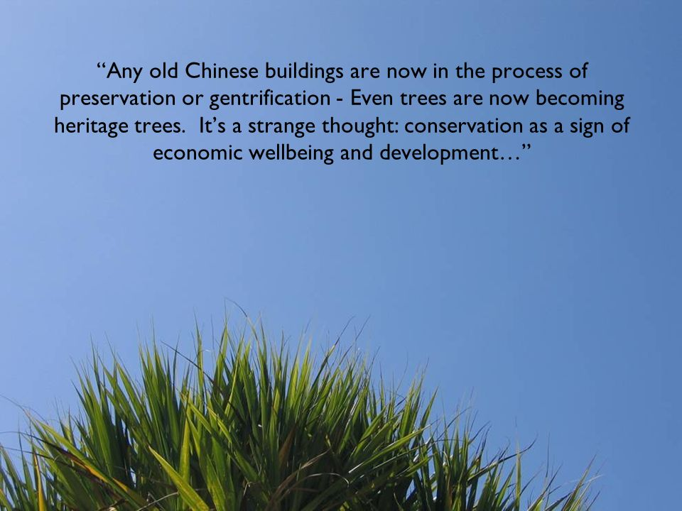 Any old Chinese buildings are now in the process of preservation or gentrification - Even trees are now becoming heritage trees. It's a strange thought: conservation as a sign of economic wellbeing and development…