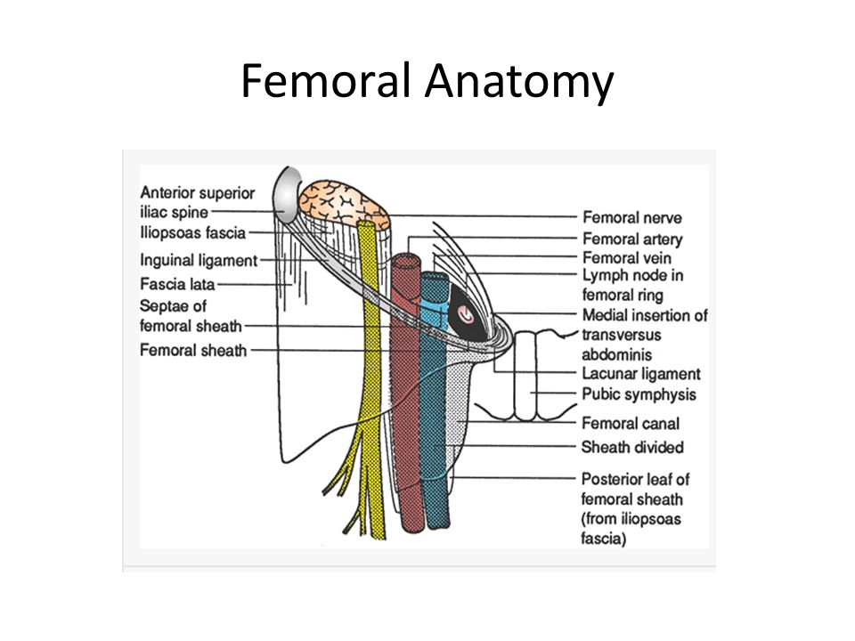 Hernia anatomy pictures