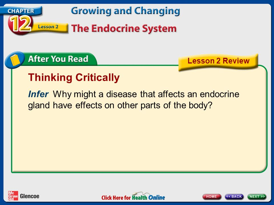 Lesson 2 Review Thinking Critically. Infer Why might a disease that affects an endocrine gland have effects on other parts of the body