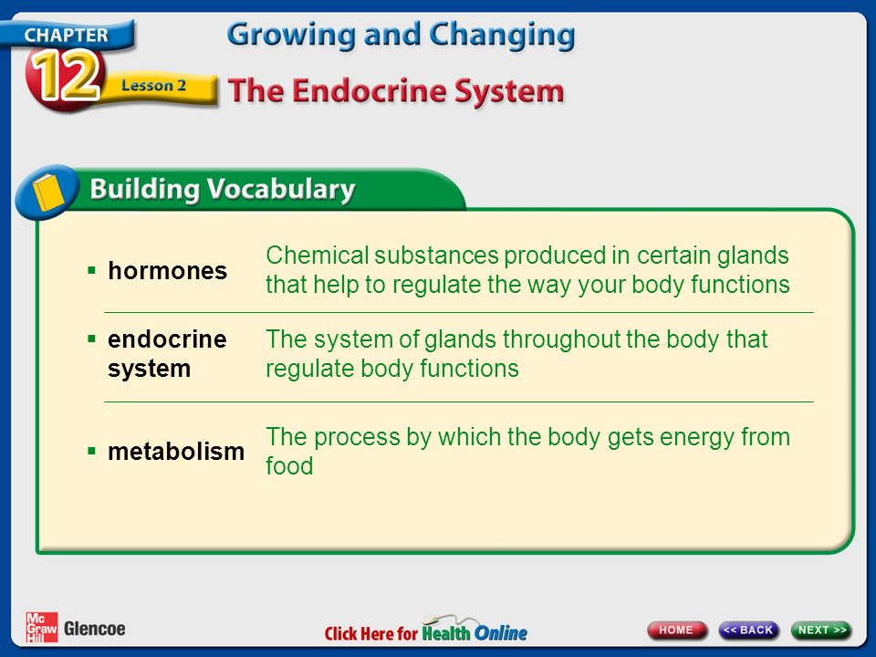 The system of glands throughout the body that regulate body functions