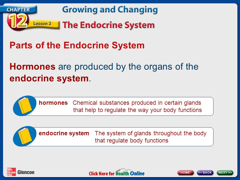 Parts of the Endocrine System