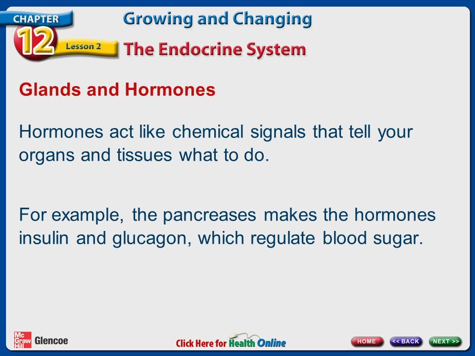 Glands and Hormones Hormones act like chemical signals that tell your organs and tissues what to do.