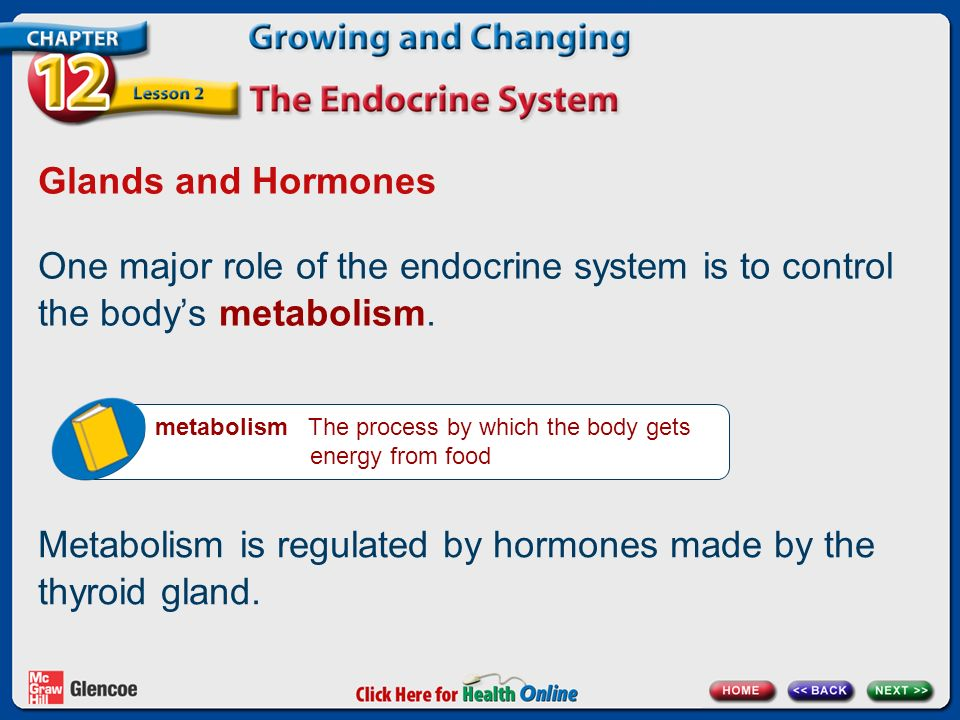 Metabolism is regulated by hormones made by the thyroid gland.