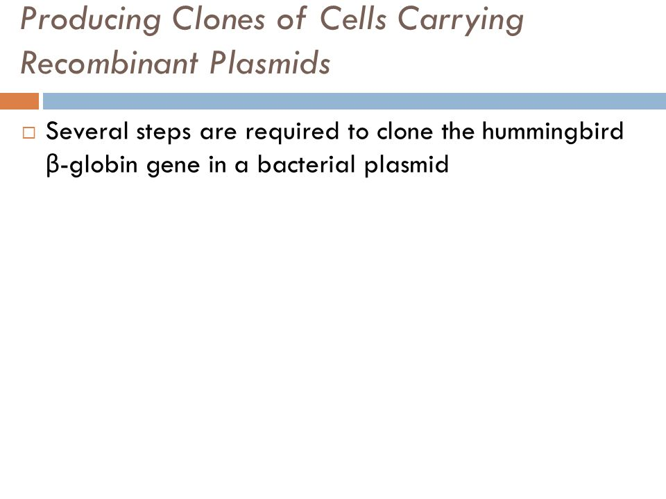 Producing Clones of Cells Carrying Recombinant Plasmids