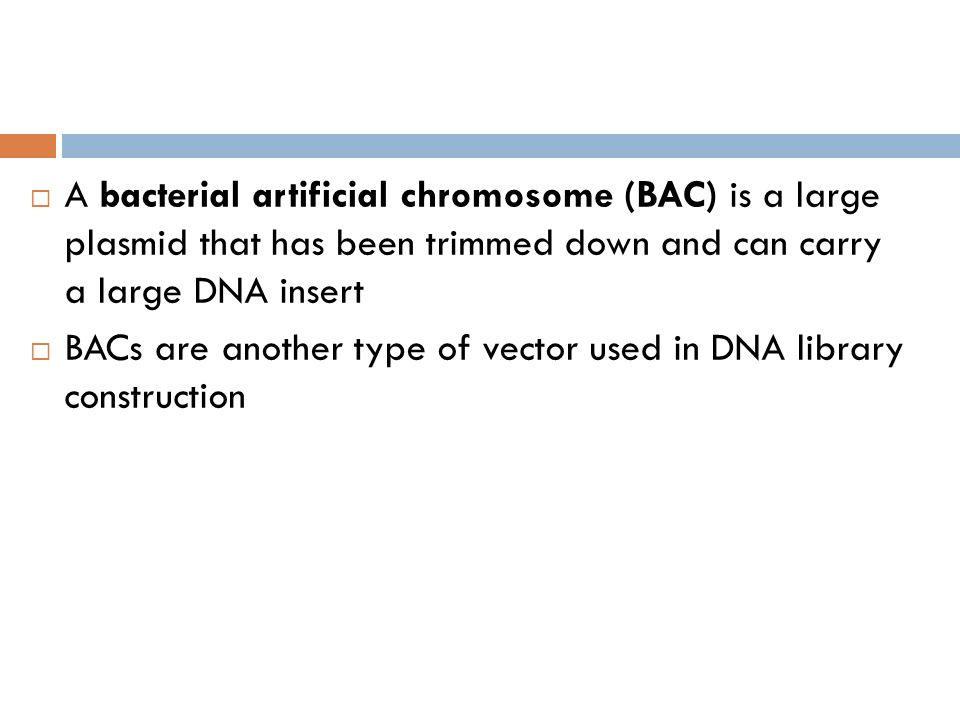 A bacterial artificial chromosome (BAC) is a large plasmid that has been trimmed down and can carry a large DNA insert