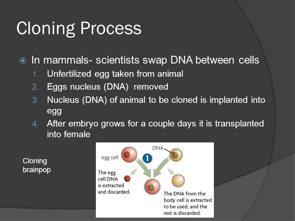 Cloning Process In mammals- scientists swap DNA between cells