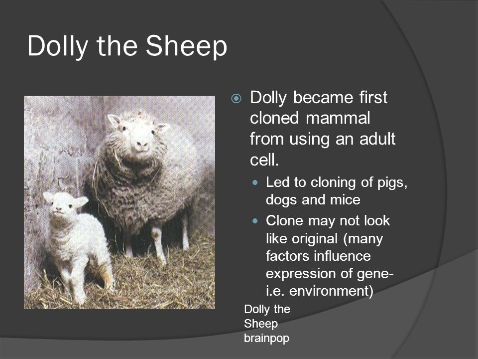 Dolly the Sheep Dolly became first cloned mammal from using an adult cell. Led to cloning of pigs, dogs and mice.