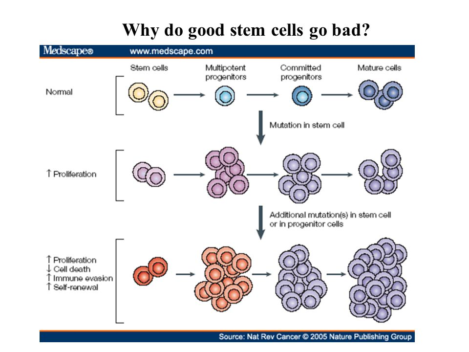 stem cells good bad and ugly Experimental models have shown that nad+ supplementation is beneficial for maintaining carbohydrate metabolism, cardiovascular function, stem cell function, and longevity [137] moreover, nicotinamide prevents cellular senescence by reducing excessive ros production [138, 139] several human.