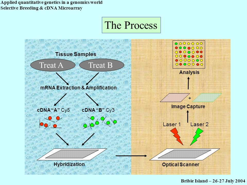 mRNA Extraction & Amplification