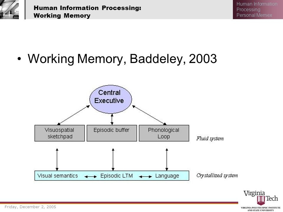 Human Information Processing: Working Memory