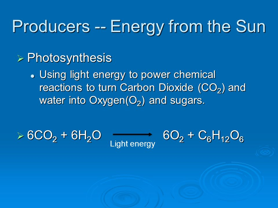 Producers -- Energy from the Sun