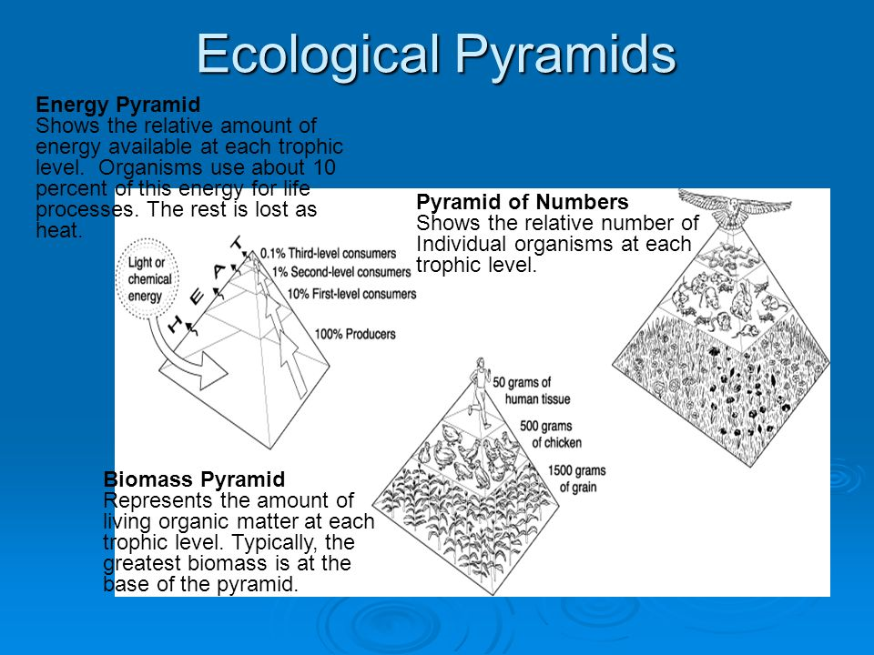 Ecological Pyramids Energy Pyramid